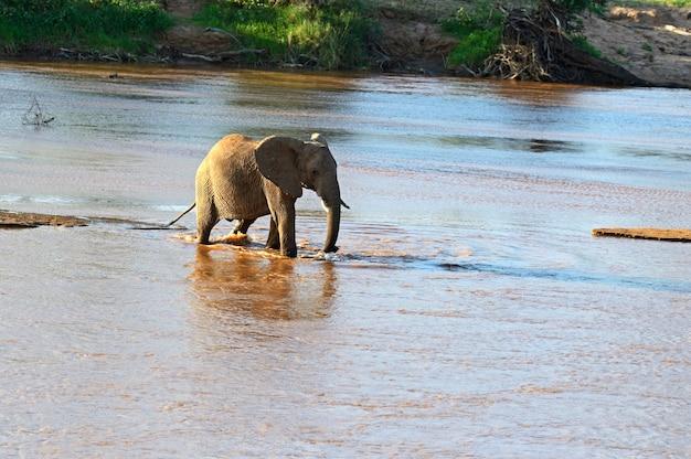 Éléphants D'afrique Dans Leur Habitat Naturel. Kenya Photo Premium