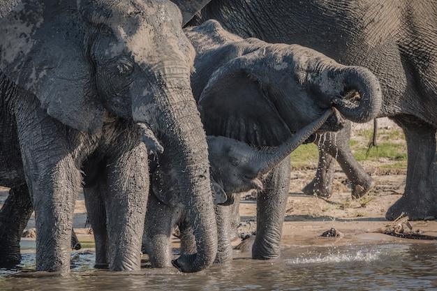 Éléphants Buvant De L'eau Près Du Lac Pendant La Journée Photo gratuit