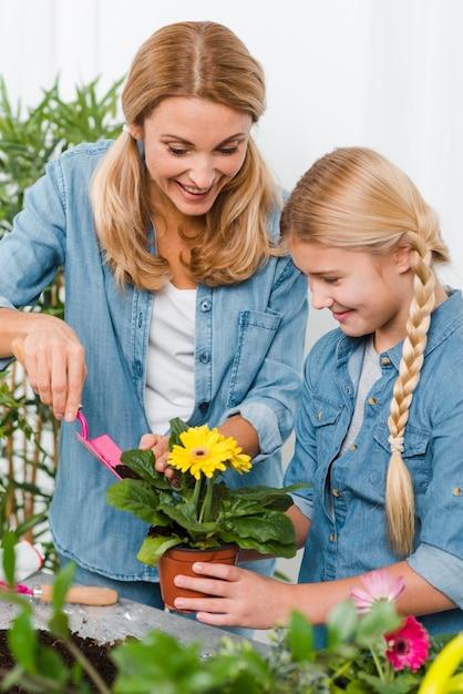 Élevé, Angle, Mère Fille, Planter, Fleur Photo gratuit