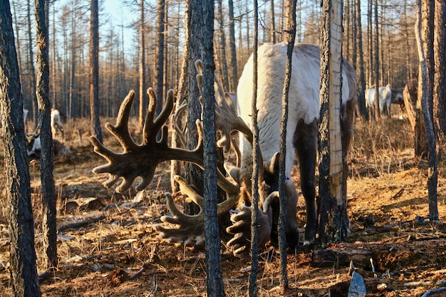 Elfe Sauvage Paissant Dans Une Forêt Entourée De Nombreux Arbres Nus Photo gratuit