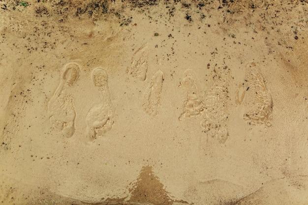 Empreintes de pas sur le sable. sur la plage. Photo Premium