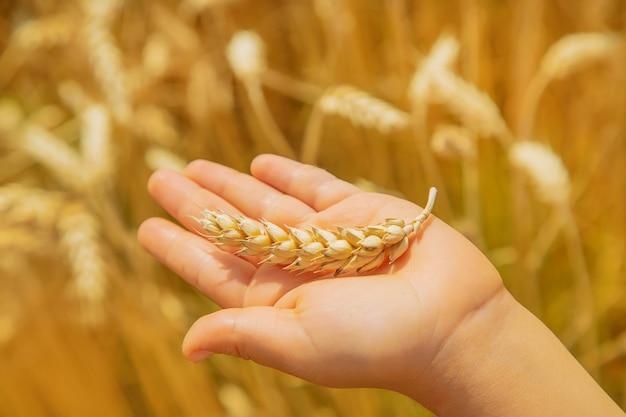Un enfant dans un champ de blé. Photo Premium
