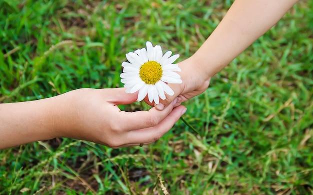 L'enfant donne la fleur à sa mère. mise au point sélective. Photo Premium