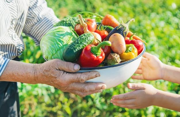 Enfant et grand-mère dans le jardin avec des légumes dans leurs mains. Photo Premium