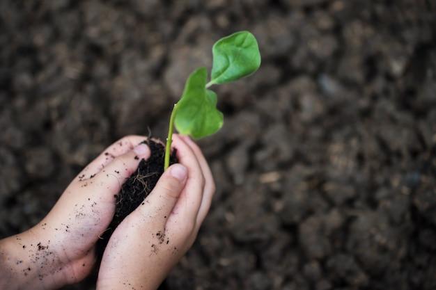 Enfant, mains, plante, arbre, terre Photo Premium