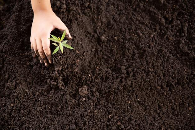 Enfant, mains, tenue, soin, jeune, plante verte Photo gratuit