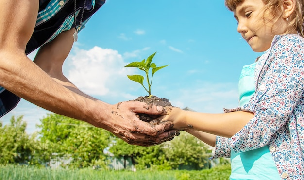 Enfant et père des plantes dans le jardin. Photo Premium