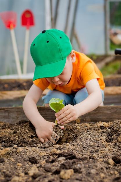 Enfant plante un jeune arbre Photo Premium