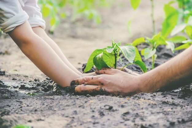 Un enfant plante une plante dans le jardin. mise au point sélective. Photo Premium