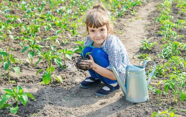 Enfant des plantes et arrosage des plantes dans le jardin. mise au point sélective. Photo Premium