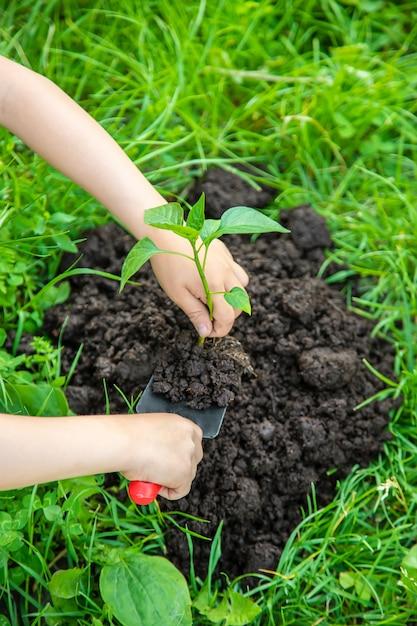 Enfant des plantes et arroser des plantes dans le jardin Photo Premium