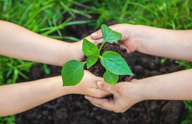 Les enfants plantent des plantes dans le jardin. mise au point sélective. Photo Premium