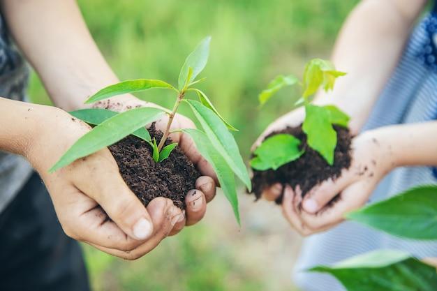 Les enfants plantent des plantes ensemble dans leurs mains. Photo Premium