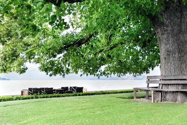 Un énorme arbre est situé sur la rive d'un lac sur un fond de montagnes avec un banc autour du tronc. Photo Premium