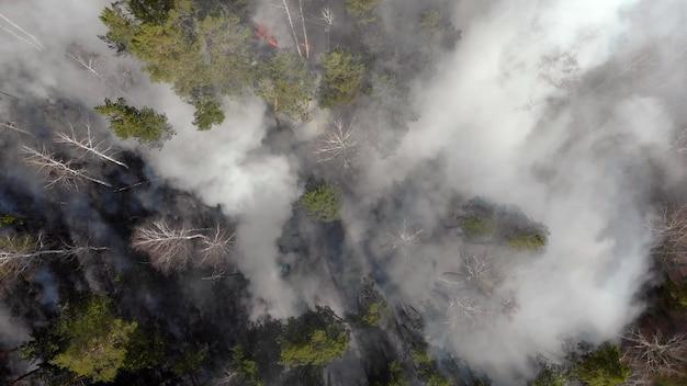 D'énormes Bouffées De Fumée Sombres S'élèvent D'un Incendie De Forêt. Photo Premium
