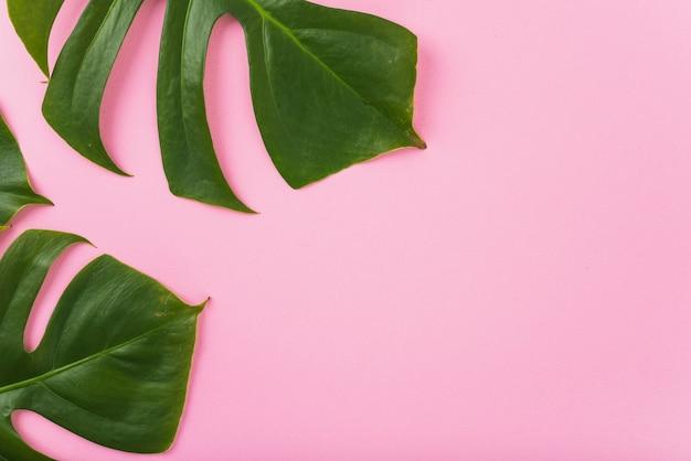 Énormes feuilles de monstera Photo gratuit
