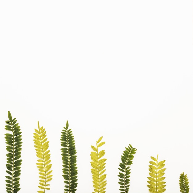 Ensemble de brindilles de fougères Photo gratuit
