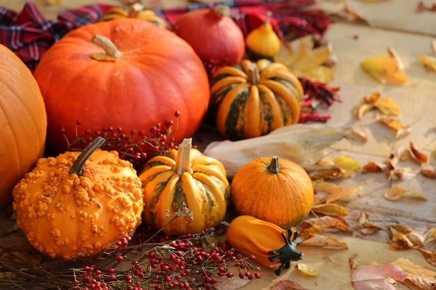 Ensemble de citrouilles d'automne. action de grâces. légumes d'automne. citrouilles, branches avec baies. automne Photo Premium