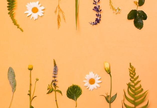 Ensemble de fleurs et de feuilles vertes Photo gratuit