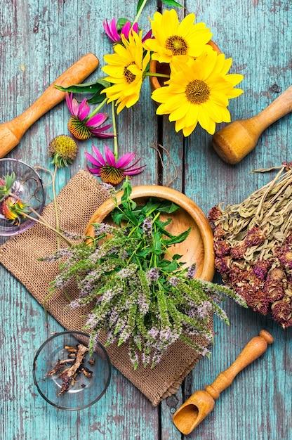 Ensemble d'herbes médicinales Photo Premium