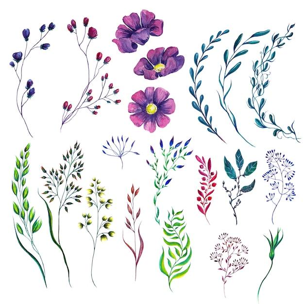 Ensemble de plantes à fleurs aquarelles Photo Premium
