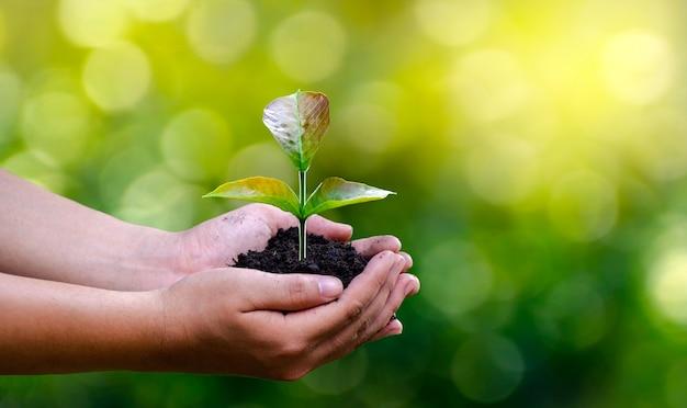 Environnement entre les mains des arbres qui font pousser des plants. bokeh vert Photo Premium