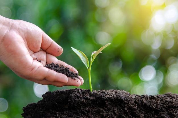 Environnement jour de la terre dans les mains des arbres qui poussent des plants. bokeh vert femme arbre nat Photo Premium