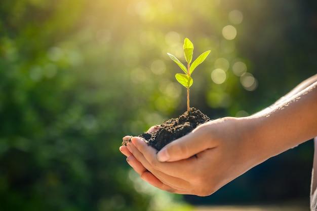 Environnement jour de la terre entre les mains des arbres qui poussent. femme main tenant l'arbre sur l'herbe de champ de nature concept de conservation de la forêt Photo Premium