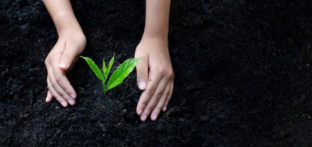 Environnement jour de la terre entre les mains des arbres qui poussent des plants Photo Premium
