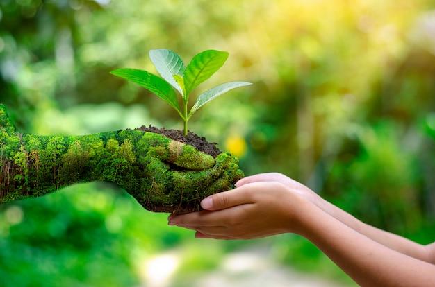 Environnement jour de la terre entre les mains des arbres qui poussent. Photo Premium