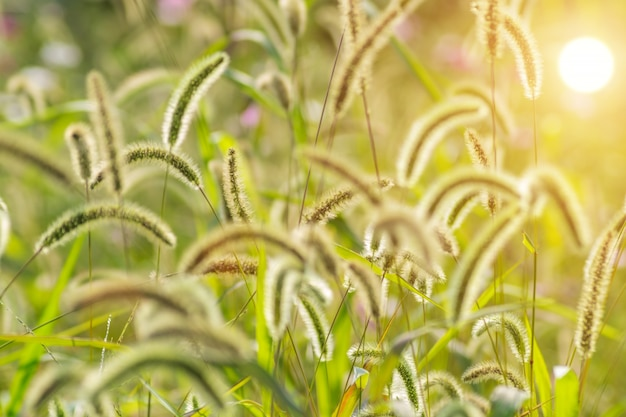 Environnement naturel culture de la flore extérieure Photo gratuit
