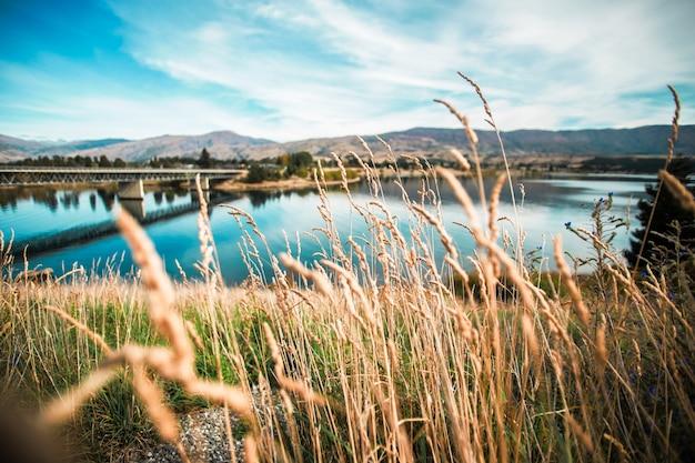 Épis De Blé Avec Pont Arrière-plan Photo gratuit
