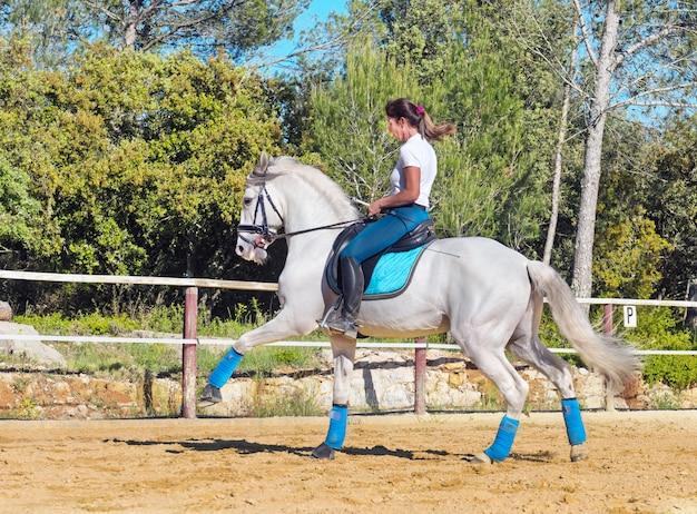 Équitation femme sur étalon Photo Premium