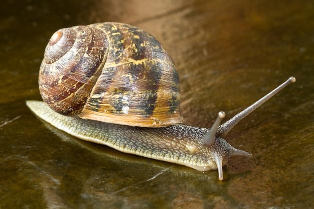 Escargot Photo Premium