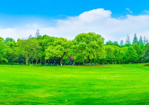 Espace extérieur en bois paysage forêt verte Photo gratuit