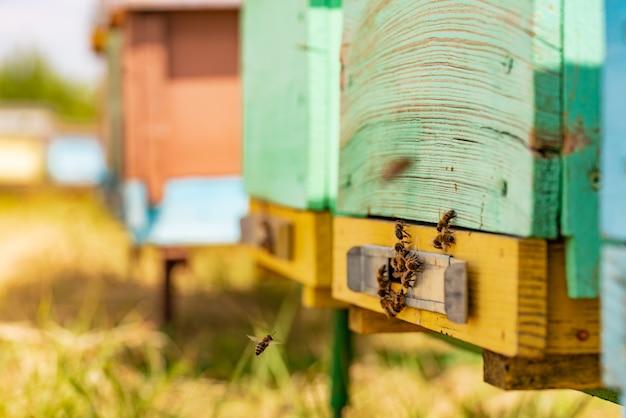 Essaim D'abeilles à L'entrée De La Ruche Photo Premium