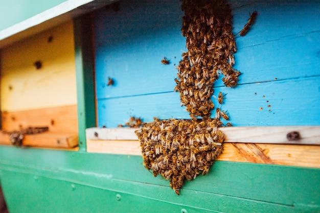 Essaim D'abeilles S'envolent Pour La Ruche Photo Premium