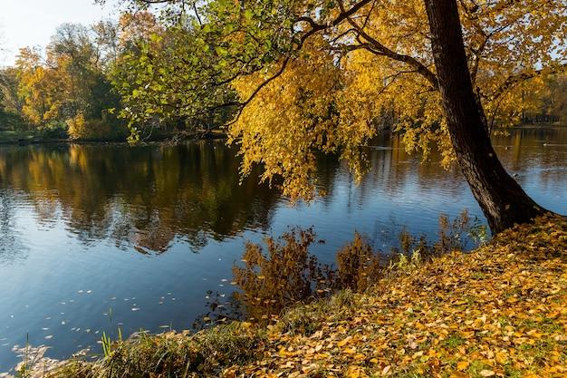 Étang En Automne, Feuilles Jaunes, Reflet.automne Forêt Lac Reflet Paysage. Photo Premium