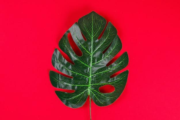 Été idées concept bordure de cadre noir blanc feuille tropicale sur fond rouge, espace copie vue de dessus Photo Premium