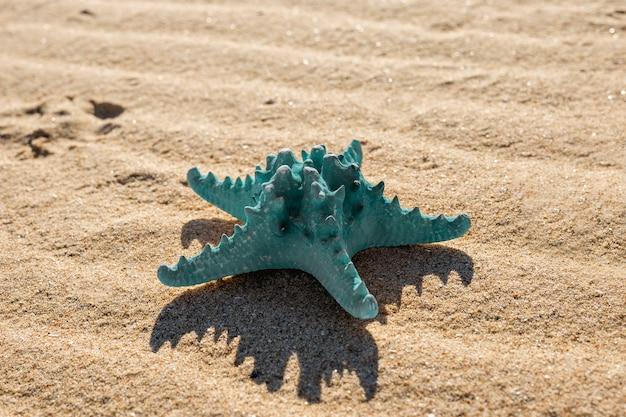 Étoile De Mer Bleue Sur La Plage De Sable Fin Photo gratuit
