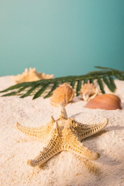 Étoile de mer avec des coquillages et des feuilles sur la plage de sable fin Photo gratuit