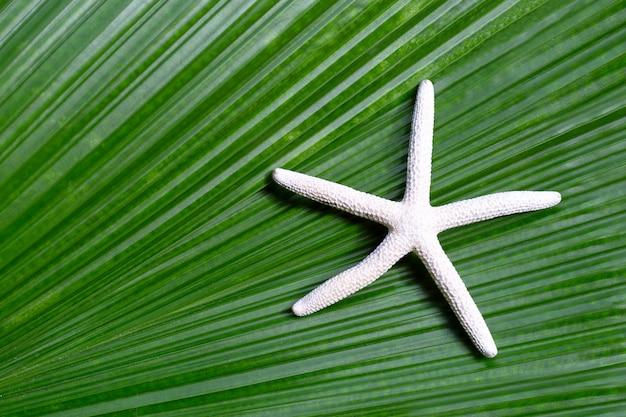 Étoile De Mer Sur Les Feuilles De Palmiers Tropicaux. Profitez Du Concept De Vacances D'été. Photo Premium