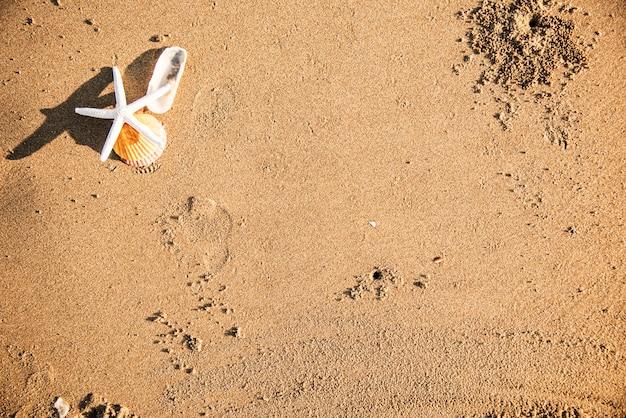 Étoiles de mer séchées sur le fond de la plage Photo gratuit