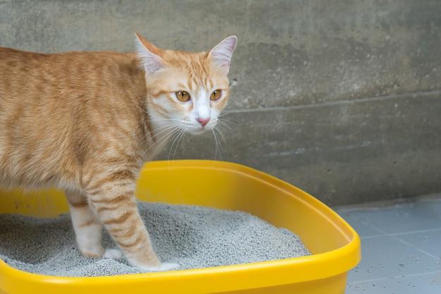 L'excrétion des chats est quotidienne. Photo Premium