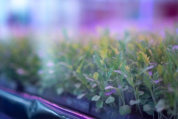 Expériences sur la culture de plantes dans la maison pour l'éducation Photo Premium