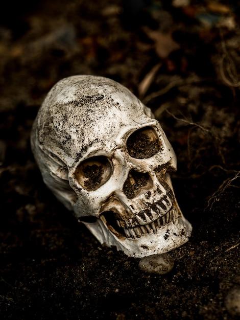 En face du crâne humain enfoui dans le sol avec les racines de l'arbre sur le côté. Photo Premium