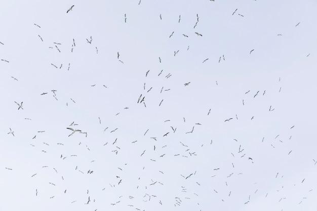 Faible angle de vue de mouettes volant dans le ciel Photo gratuit