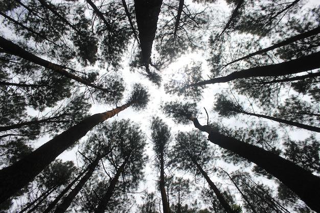 Faible vue des arbres de la multitude Photo Premium