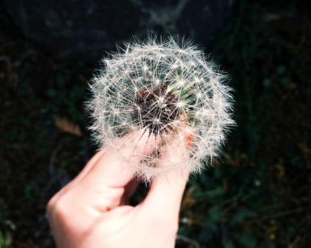 Faire un vœu Photo gratuit