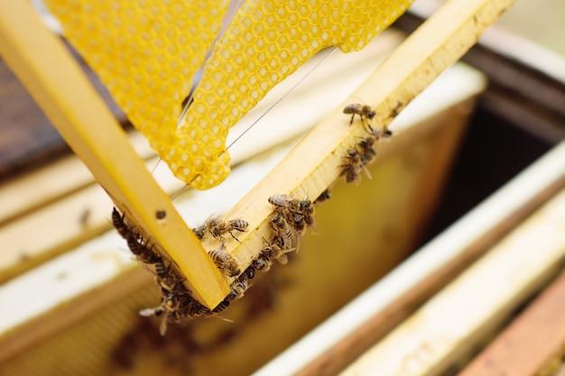Une famille d'abeilles gros plan sur un cadre de rucher Photo Premium
